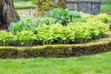 Bed Weed Control
